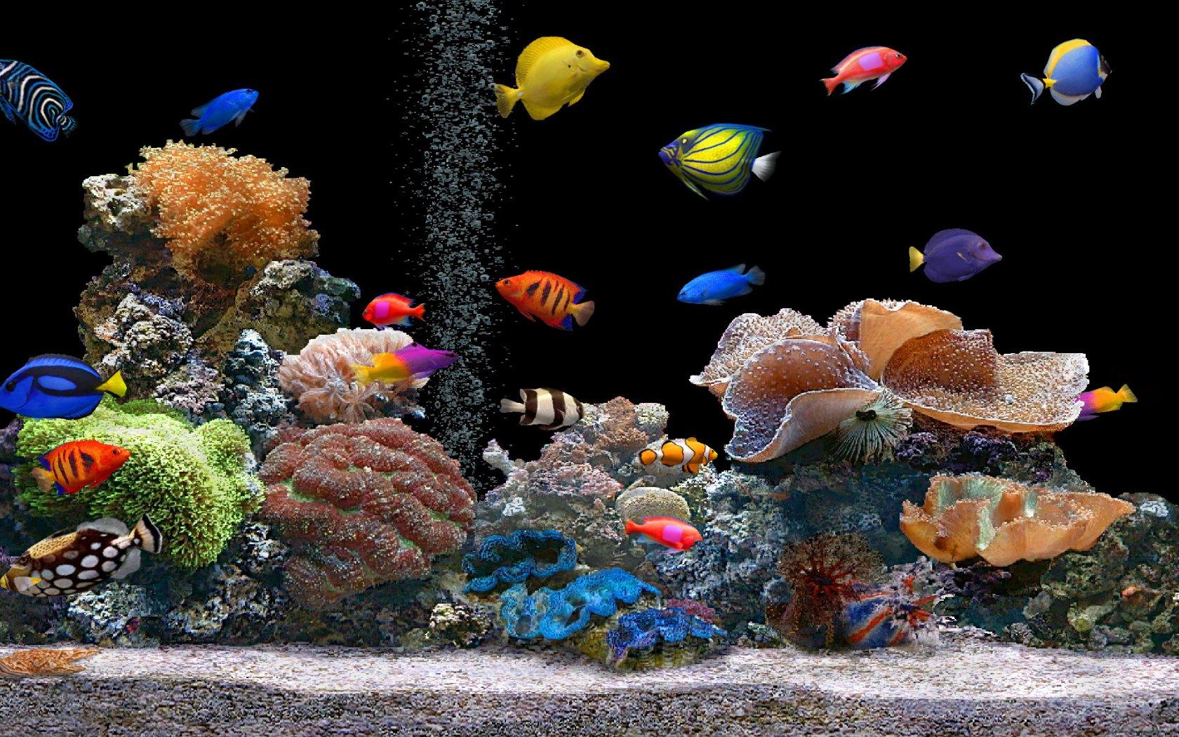 Des plantes d aquarium pour poissons d ornement sant au for Aquarium plat